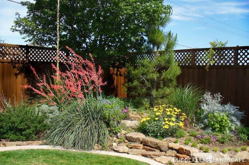 6 Texas Landscape Must Haves Think Low Maintenance And Drought Resistant Braustin A Better Way Home